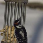 7040cr birdfeeder activities Dec 17