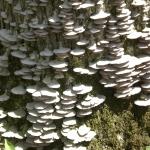 CIMG0317 lichens