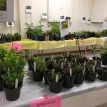 Plant sale 2019